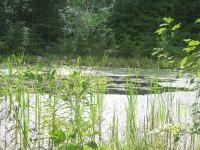 Scheier-pond2