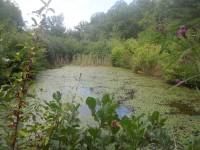 scheier-pond1